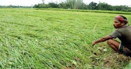 কৃষকদের ক্ষতি পোষাতে ৮০ কোটি টাকা বরাদ্দ