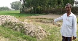 মুরাদনগরে দরিদ্র কৃষকের ফসল কেটে নেয়ার অভিযোগ