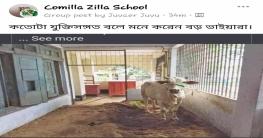 কুমিল্লা জিলা স্কুলের শ্রেণিকক্ষের বারান্দা এখন গরুর বাসস্থান !