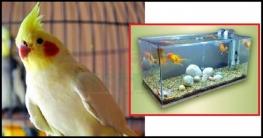 খাঁচায় পাখি ও অ্যাকুরিয়ামে মাছ পালন নিয়ে ইসলাম কি বলে?