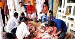 অসহায় ও দুস্থদের জন্য বাংলাদেশ ছাত্রলীগের পশু কোরবানী